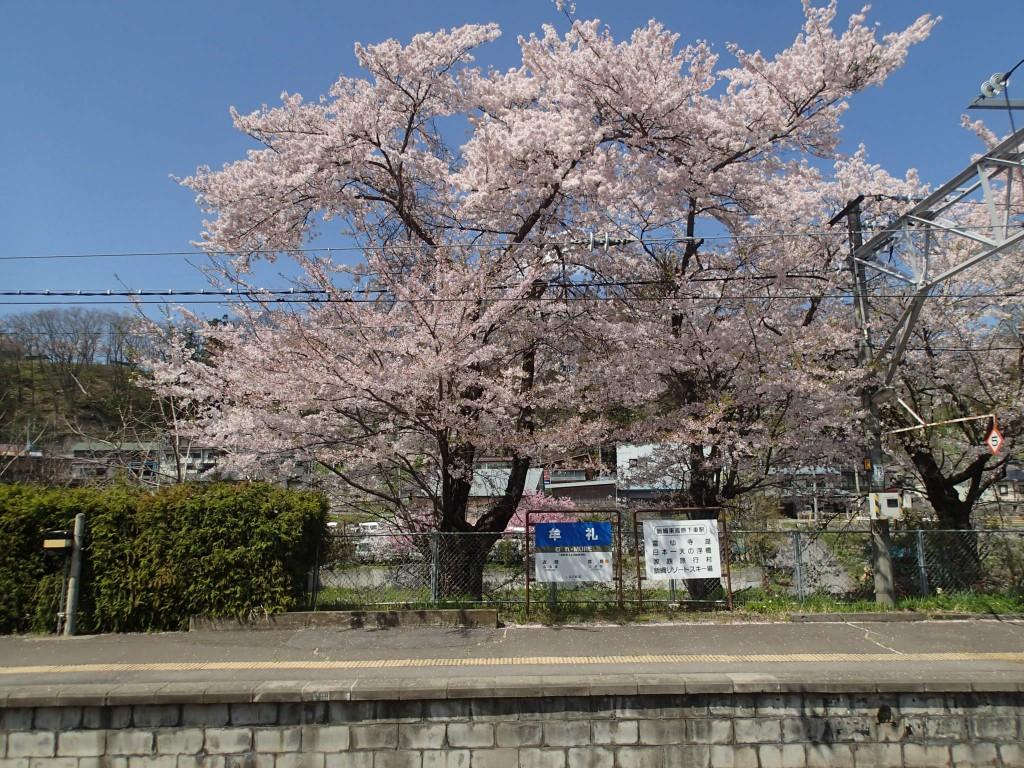 13:20 鈍行に乗り換えたのは悪いことばかりでなかった。新幹線では見れない美しい景色がずっと続く。4月終わりというのに桜が満開。息子の昼寝も出来た。彼はまだしっかり昼寝しないともたない。