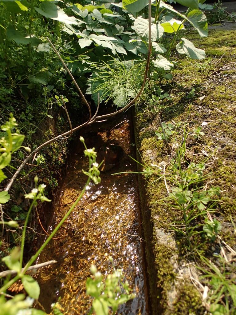 13:55 湧き水が美味そう。これもまた春の息吹を感じる。